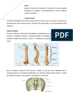 Aula 12 - Fisiologia Do Trabalho Muscular