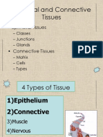 Epithelial and connective tissue.ppt