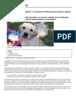 Animales_ No Me Pongas Esos Ojitos_ La Ciencia Confirma Que Tu Perro Quiere Darte Pena