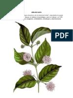 Plantas Medicinales Costa Sierra Selva