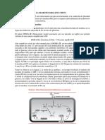 FISIOPATOLOGIA DE LA DIABETES MELLITUS TIPO 2.docx