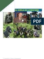 . Fatla Articulo Del Gorila Listo Ccv012010