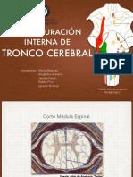 tronco.pdf