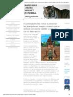 A Continuación Les Vamos a Presentar Las Jerarquias de Mayor a Menor Que Se Utilizan en Nuestro Cabildo y Cada Una Con Su Descripcion_ - Cabildo Congo Arara Dahomey Sirayandele