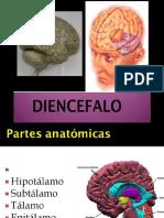 Snc Diencefalo y Tronco Encefalico