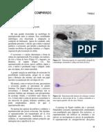 4. desenvcomparado (1).pdf