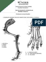 Osteologia Membro Torácico
