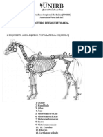 Osteologia Esqueleto Axial