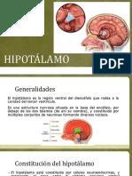 HIPOTÁLAMO PRESENTACIÓN