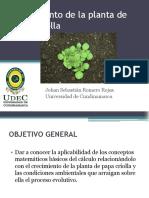 seguimientodelaplantadepapacriolla-131201183135-phpapp01