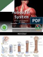 Lec13. Muscular Circulatory Respiratory System