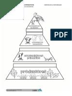 Lapbook PiramideConsumidores
