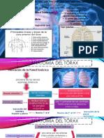 Anatomia de Torax Cirugia