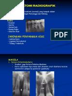 Anatomi Radiografik IIK