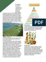 Economía Inca