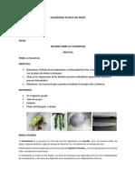Informe_planta_fotosintesis.docx