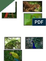 Especies en Peligro de Extinsion Jsac