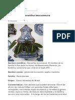 Ficha de La Marantha Leuconeura