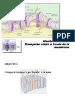 Transp Activo (1)