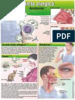 Rinita Alergica pag1