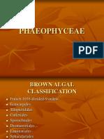 Phaeophyceae.ppt