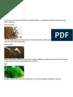 plantas medicinales 280719