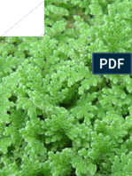 Effects of inorganic nutrient P and N application on Azolla biomass growth and nutrient uptake | IJAAR-Vol-14-No-2-p-1-9