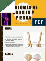ANATOMÍA DE RODILLA Y PIERNA.pptx