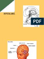 Hipotalamo Sed y Temperatura