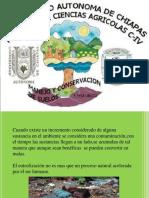 ConservacionLa Eutrofización Manual de Suelo