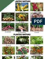 Animales y Plantas Nativas
