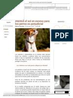 Atentos El Sol en Exceso Para Los Perros Es Perjudicial