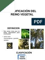 Clasificacion Del Reino Vegetal