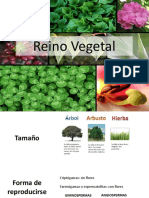 plantas-180828125901