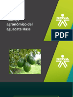 03. Manejo Agronómico Del Aguacate Hass