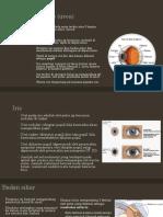 Uvea, Retina, Choroid, Nervus Optikus