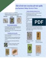 Phytoplankton Poster