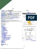 Vertebral Column - Wikipedia