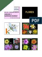 botanica3ea.pdf