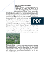 Bosques Que Existen en Guatemala