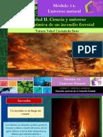 Reacción Química de Un Incendio Forestal/Módulo 14