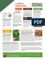 como sembrar y cultivar las habichuelas