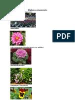 10 plantas ornamentales