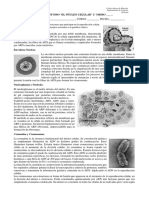 Guía de Estudio Nucleo Celular