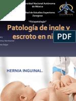 Copia de Pato Inguino Escrotal