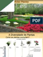 plantas completos
