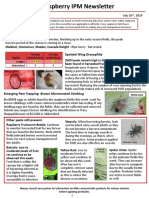 Raspberry IPM Newsletter - July 26, 2019