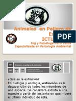 animales en via  extincion modi.ppt