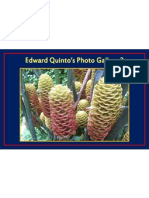 Edward Quinto's Photo Gallery 3