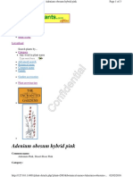 Adenium obesum hybrid pink.pdf